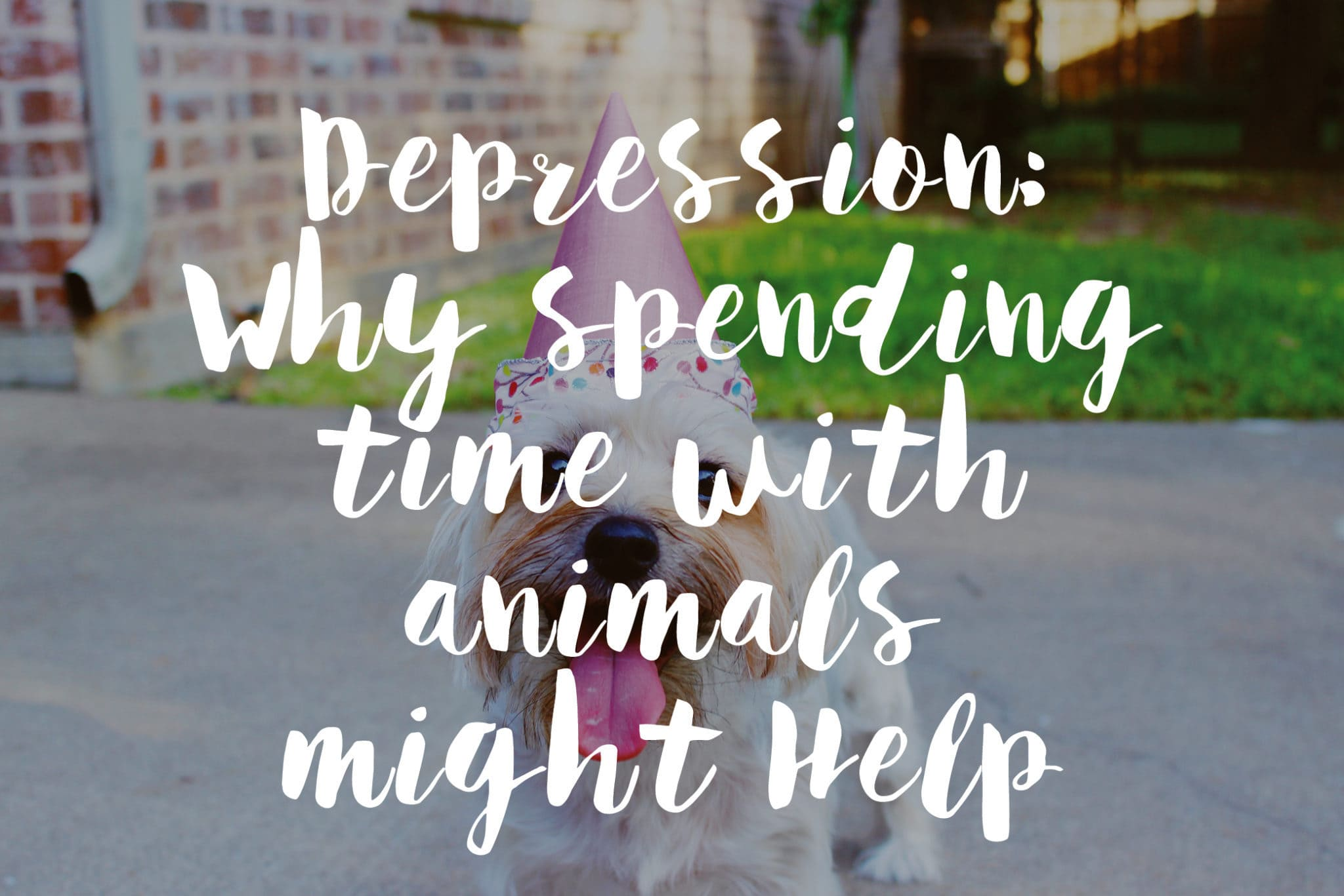 Depression Why Spending Time With Animals Might Help